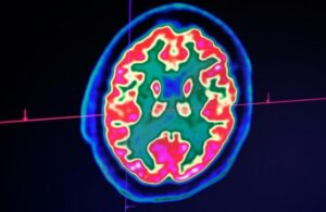 human-brain-shikkha